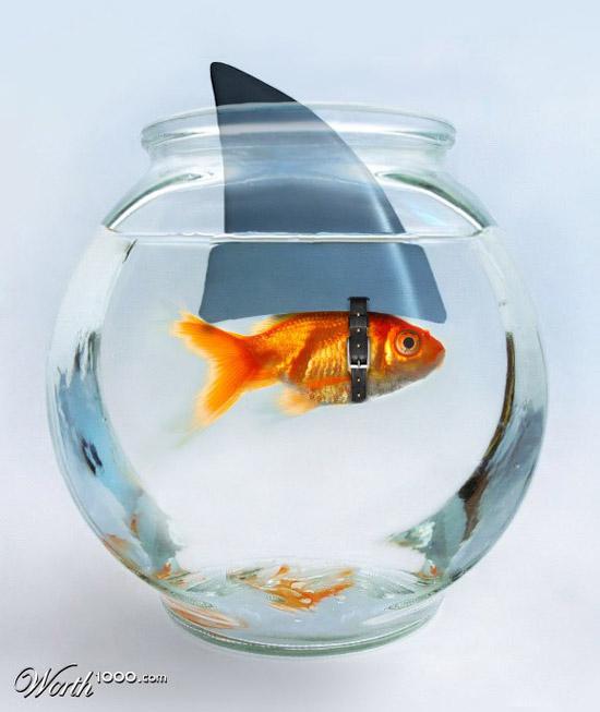 Crecer desmedidamente y sin tener resultados ni proyecciones concretas es un triunfo artificial. En la mayoría de los casos los negocios son más de los Bancos y Financieras, que de los propietarios.